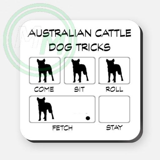 australian cattle dog tricks