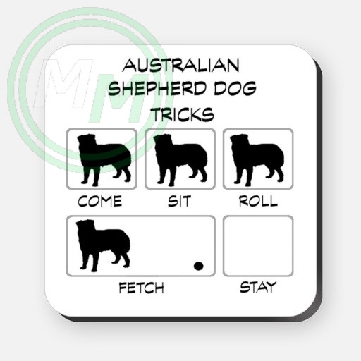 australian shepherd dog tricks
