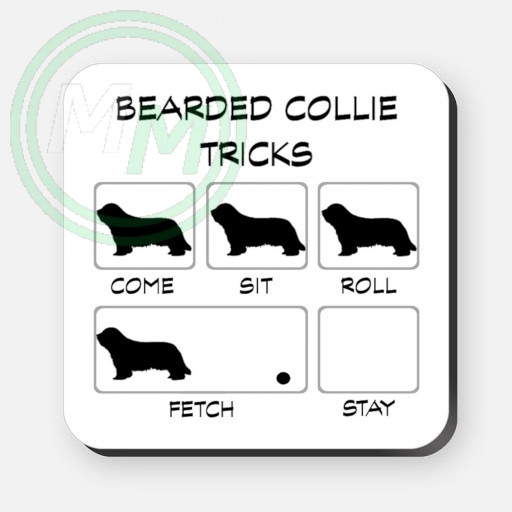 bearded collie tricks