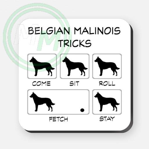 belgian malinois tricks