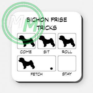 bichon frise tricks