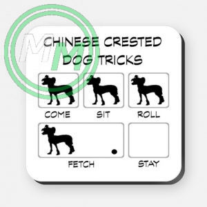 chinese crested dog tricks