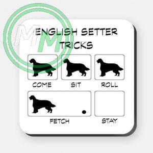 english setter tricks