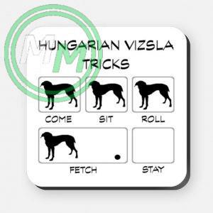 hungarian vizsla tricks