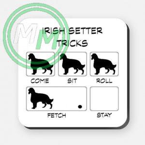 irish setter tricks