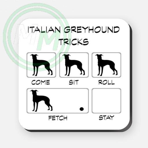 italian greyhound tricks
