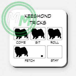 keeshond tricks