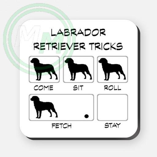 labrador tricks