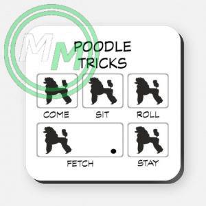 poodle tricks