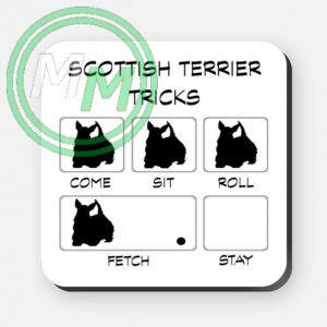 scottish terrier tricks