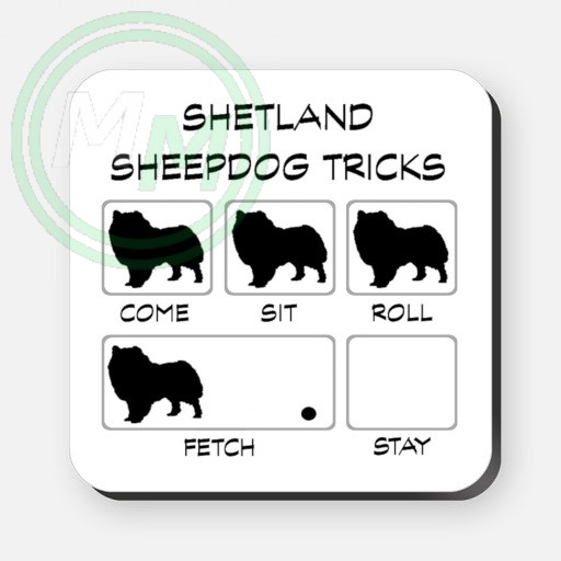 shetland sheepdog tricks
