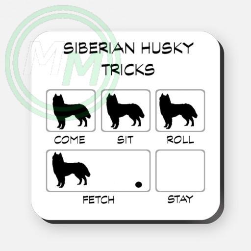 siberian husky tricks