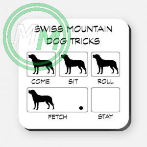 swiss mountain dog tricks