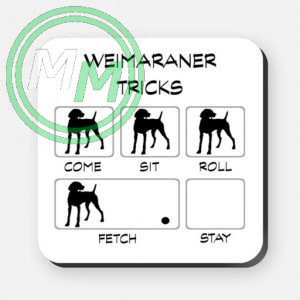 weimaraner tricks