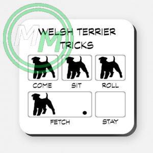 welsh terrier tricks