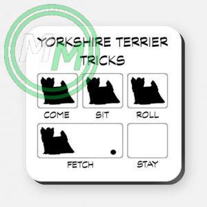 yorkshire terrier tricks